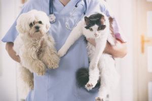 Les maladies les plus courantes chez les animaux