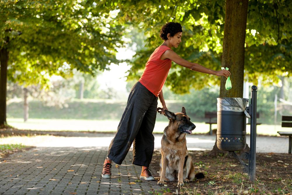 apprendre la propreté à son animal de compagnie