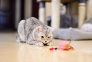 Les différents jouets destinés aux animaux de compagnie