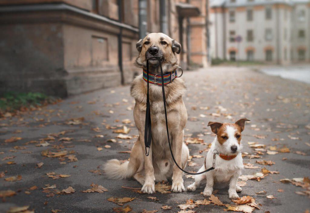 promenade chez les animaux de compagnie