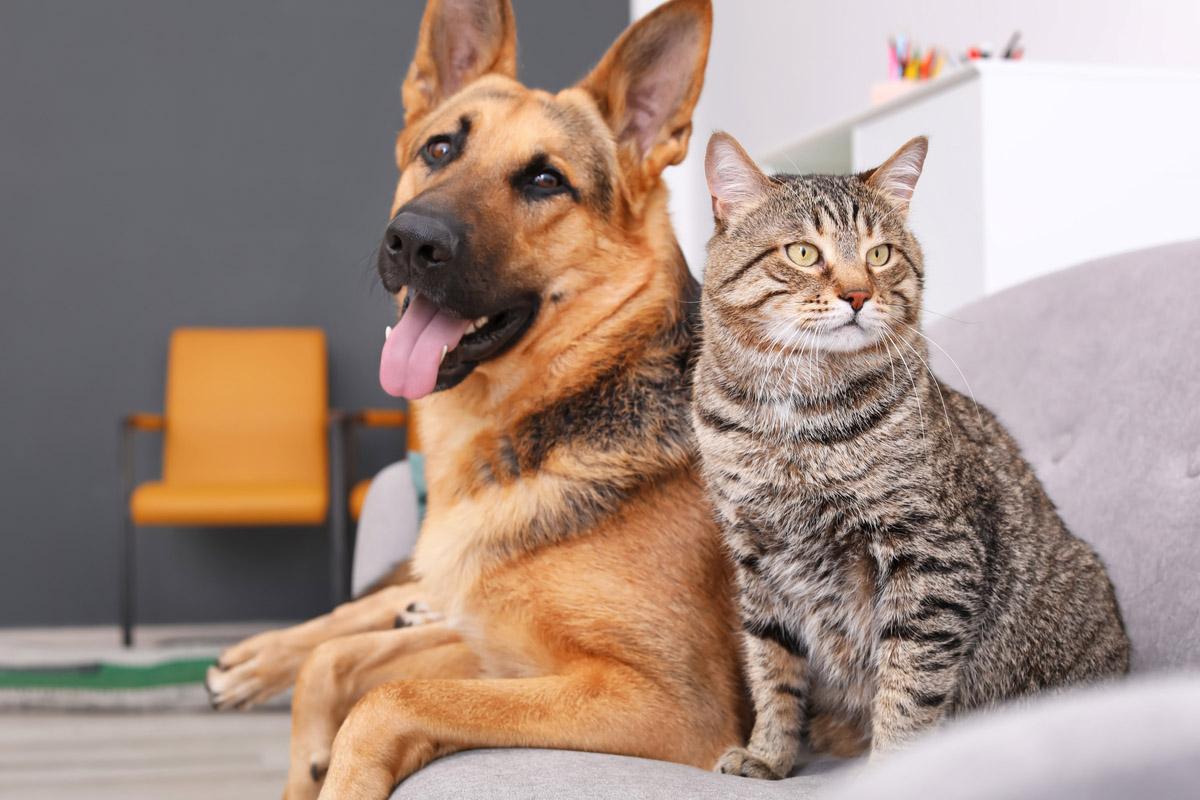 race de chien ou chat