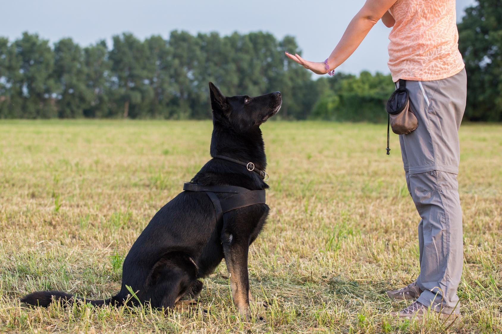 éduquer son chien au quotidien