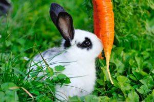 Nourrir son lapin au quotidien : 5 idées