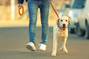 Guide pour une balade avec son chien le week-end