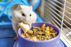 À quel moment et comment faire l'entretien d'une cage de hamster ?