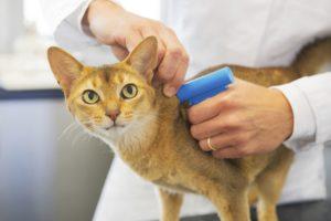 Traitement naturel pour se débarrasser des puces du chat ou du chien