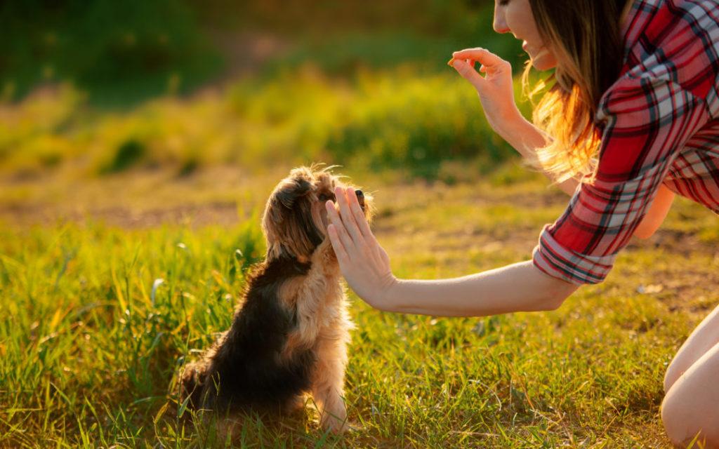 Dressage de chiens : essentiel pour votre animal de compagnie