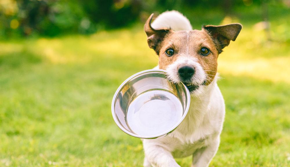 regime alimentaire chien