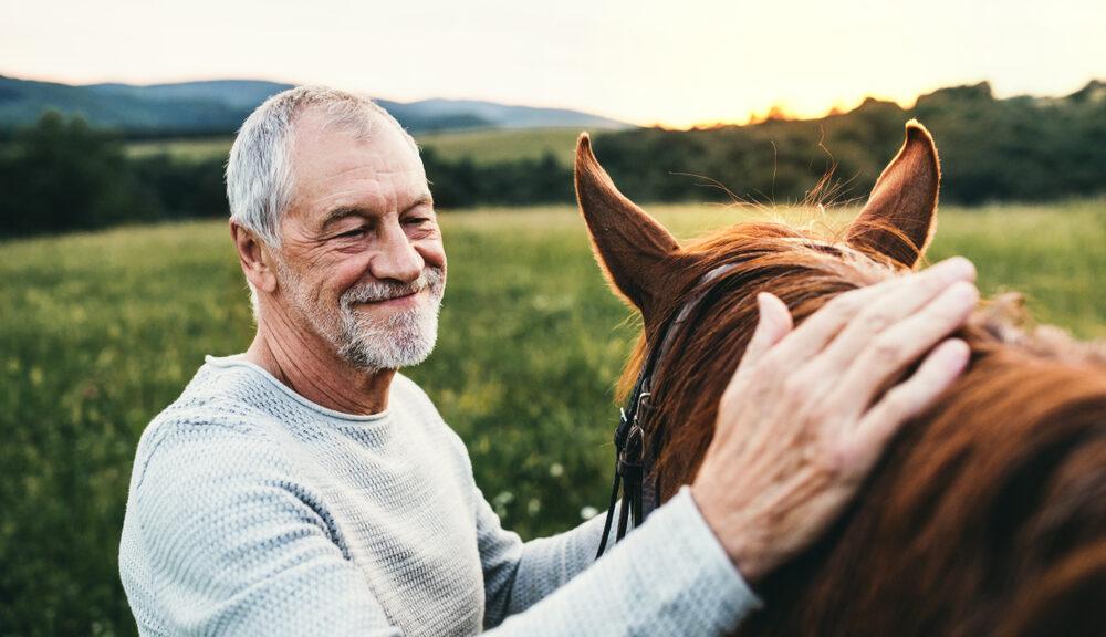 thérapie energetique pour les vieux chevaux