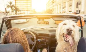 Voyager avec son chien : 5 astuces à connaitre pour assurer sa sécurité en voiture